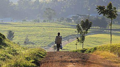 Young Kenyan professionals abandon white collar jobs for farming