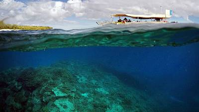 Great Barrier Reef bleaching epidemic