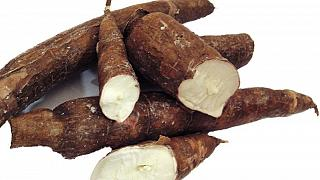 Madagascar company imports cassava starch to produce biodegradable bags