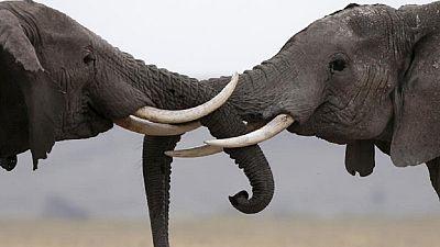 Nigeria: Saving the surviving elephants in Yankari National Park