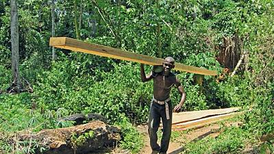Gabon seeks to industrialize wood industry