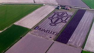 Italy: tribute for Brussels