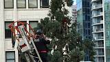 Seattle : l'homme de l'arbre inculpé d'agression