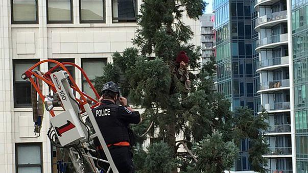 Seattle's famous #ManInTree charged with mischief