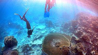 Австралия: Большой барьерный риф стремительно белеет