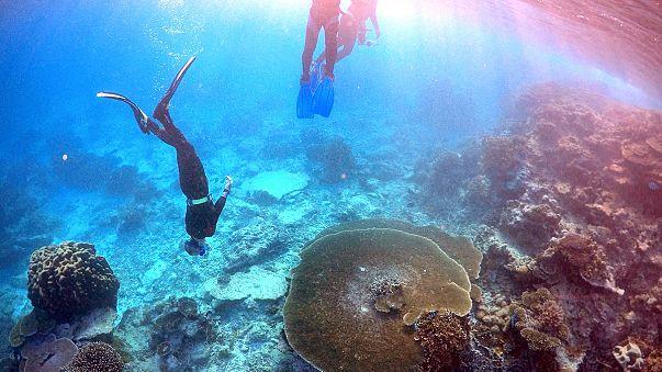 Veszélyben a Nagy-Korallzátony