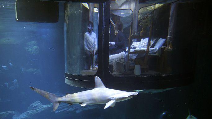 Paris'in göbeğinde köpekbalığı akvaryumunda bir gece