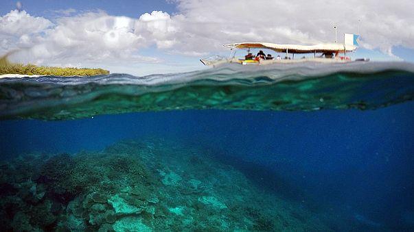 A kipusztulás fenyegeti a Nagy-korallzátonyt