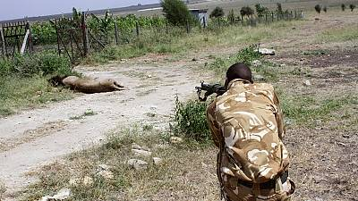 Kenyan rangers shoot stray lion dead