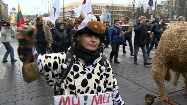 Lituania, la protesta dei produttori di latte