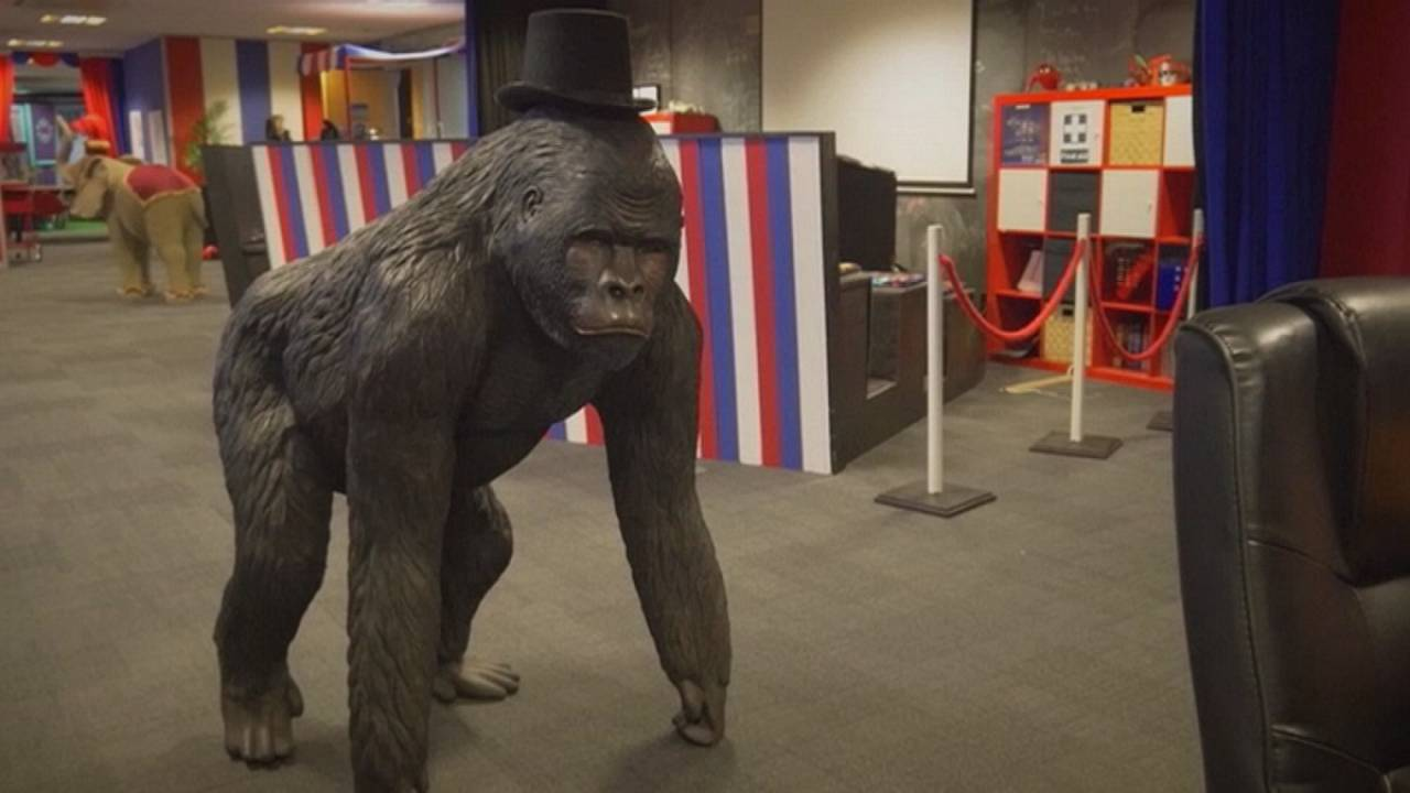 Не офис, а просто цирк!
