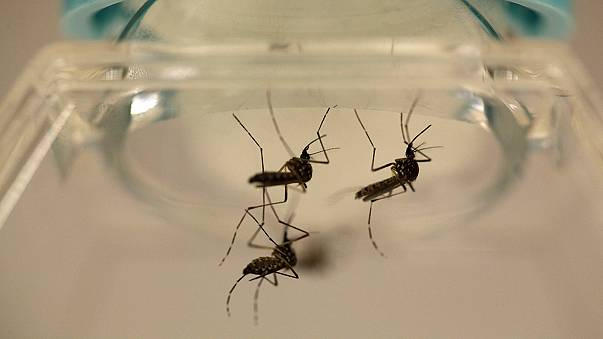 US health officials warn of mass Zika virus infections in Puerto Rico