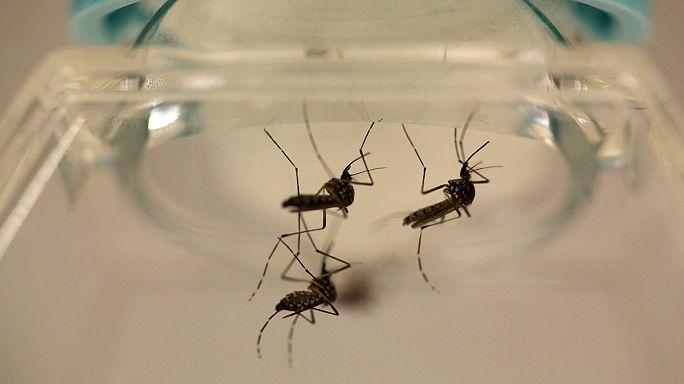 Zika'ya karşı ABD teyakkuza geçti