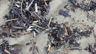 Image: Cigarette butts ocean cleanup