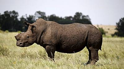South Africa to decide on global ban on rhino horn trade