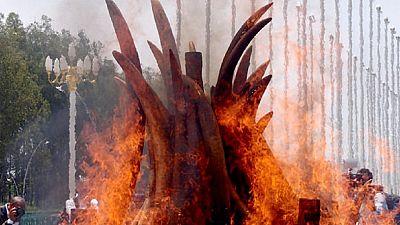 Kenya gearing up to burn 120 tonnes of ivory