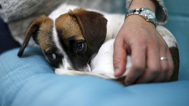 Kaffee und Hund: In L.A. öffnet das erste Dog-Café