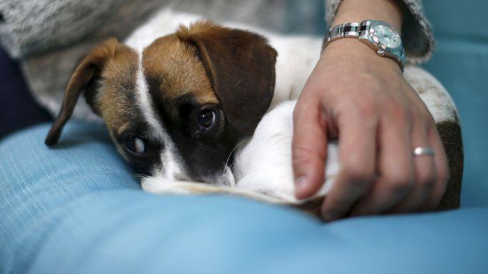 США: Dog Café для собачников и собак