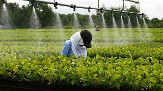 L'agro-industrie, une solution pour la sécurité alimentaire en Afrique