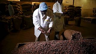 Nigeria's cocoa farmers and grinders still waiting on government policy