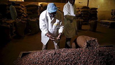 Nigeria : l'industrie cacaoyère dans l'attente d'une dynamisation