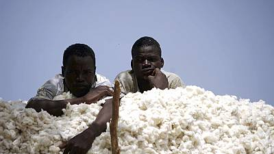 Burkina Faso phasing out GMO cotton, citing poor quality