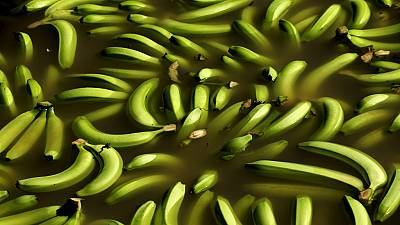 Uganda: Bananas, a demand not too slippery