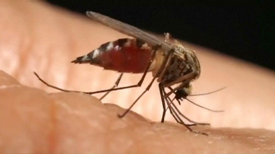 Cientistas norte-americanos estabelecem ligação entre vírus Zika e microcefalia