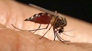 Wissenschaftlich bewiesen: Zusammenhang zwischen Zika-Virus und Mikrozephalie