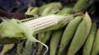 Zambia lifts ban on maize exports
