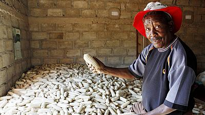 Zambia lifts maize export ban
