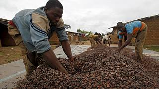Ivory Coast cocoa farmers hit by price dispute