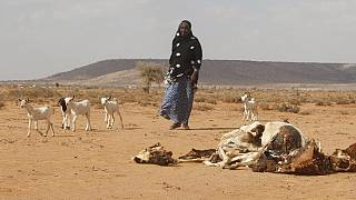 Somalia drought hits 4.7 million people