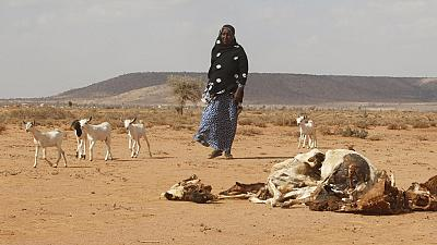 Somalia drought hits 4.7 million people