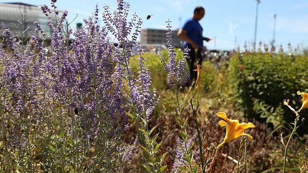 Image: Amsterdam bees