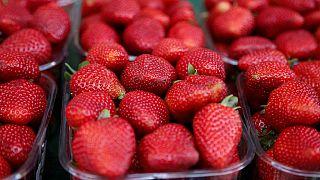 Maroc : un festival pour promouvoir la culture de la fraise