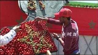 Morocco celebrates strawberry cultivation