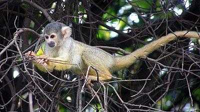 Af. du Sud : des singes maltraités secourus