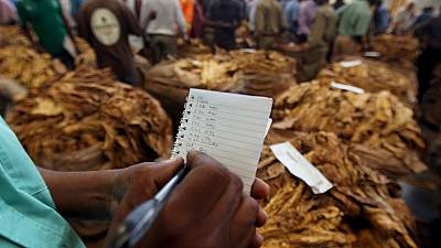 Zimbabwe's tobacco revenue up in smoke