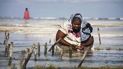 Zanzibar : la culture des algues affectée par le réchauffement climatique