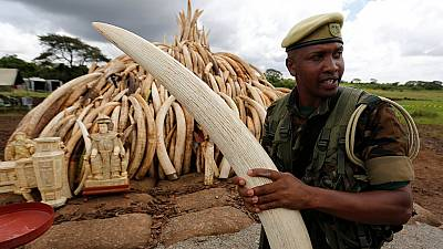 Kenya destroys tusks to deter poachers from killing elephants