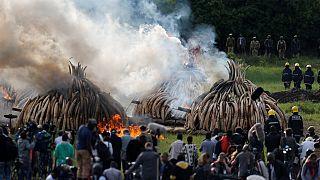 120 tonnes of ivory in flames in Kenya