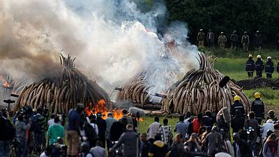 120 tonnes of ivory in flames in Kenya