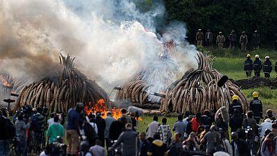 Crémation spectaculaire d'ivoire d'éléphant au Kenya