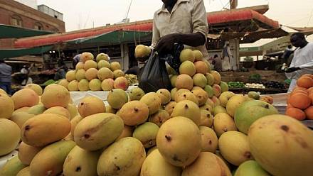 Senegal plans to boost mango exports