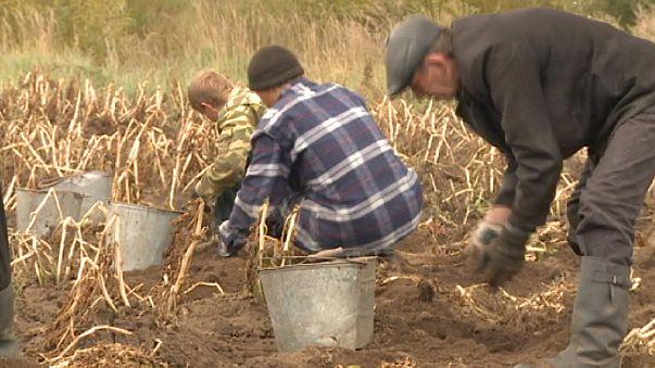 Rusia: concesión de una hectárea de tierra gratis por ciudadano