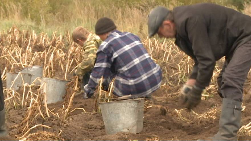 Rusya doğuyu teşvik için bedava toprak dağıtıyor