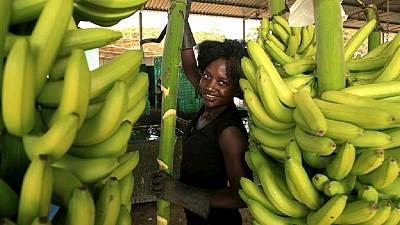 Kenyan entrepreneur to the rescue of banana farmers