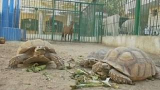Egypt: Private zoo keeper provides home for wild animals