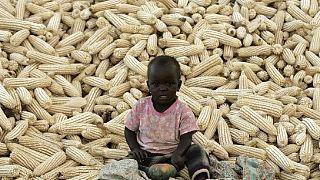 La Zambie annonce une hausse de sa production de maïs